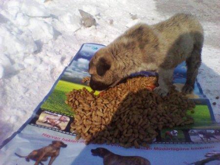 Sokak ve yaban hayvanları için doğaya yiyecek bırakıldı