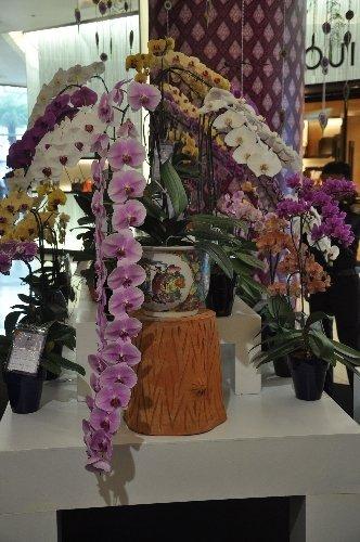 Tayland'da orkideden yapılmış 2,5 metrelik filler ilgi odağı oldu