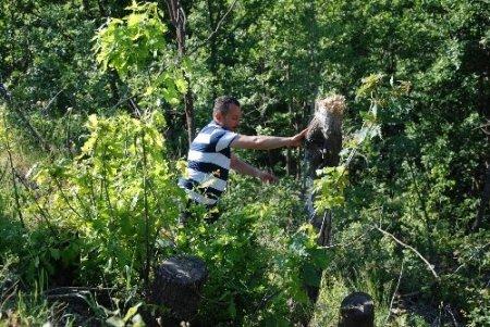 TEMA, orman tahriplerine tepki gösterdi