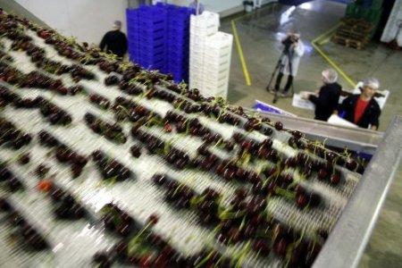 Türkiye artık kirazı 20 açıdan fotoğraflayarak ihraç edecek