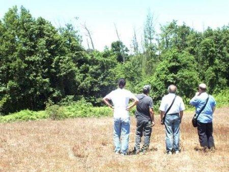Türkiye'nin en büyük longozundaki kuruyan ağaçlar araştırılıyor