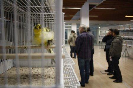 Türkiye'nin en güzel kuşları belirlendi