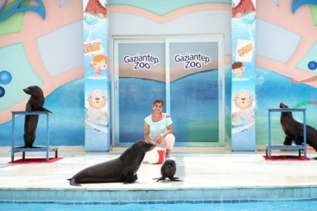 Türkiye'nin ilk yavru foku Gaziantep'te dünyaya geldi