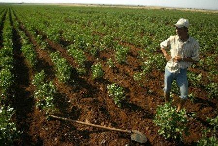 TZOB: Kırsalda genç nüfus azlığı tarımı olumsuz etkiliyor