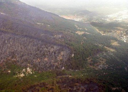 Yanan orman havadan görüntülendi