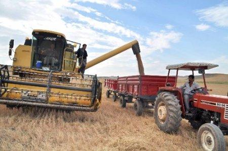 Yerköy Ziraat Odası dane kaybına karşı çiftçileri uyardı