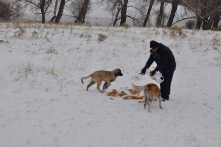 Yozgat Belediyesi, sokak ve yaban hayvanları için doğaya yiyecek bıraktı