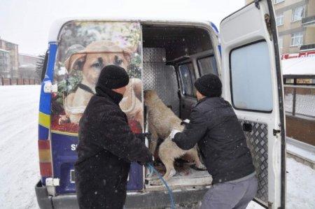 Yozgat belediyesi kışın sokak köpeklerini hayvan barınağında