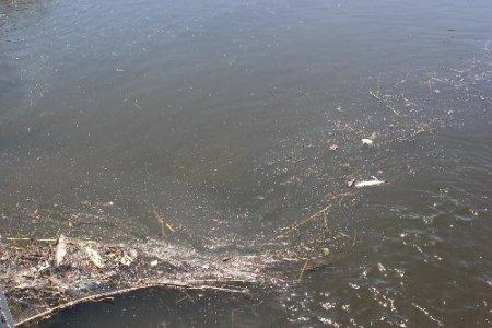 Zeytinli'de onlarca ölü balık dereleri doldurdu