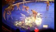 Aslanlar, Eğitmenlerine Saldırdı