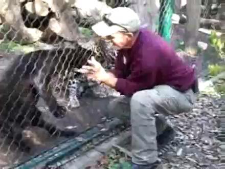 Leopardan Tehlikeli Hareket