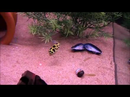 Meraklı Balık Lazer Kovalama